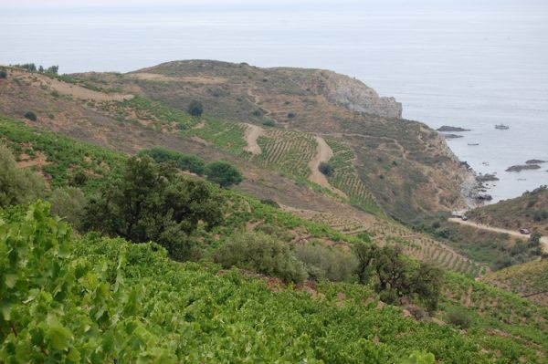 vignoble_banyuls_collioure_24